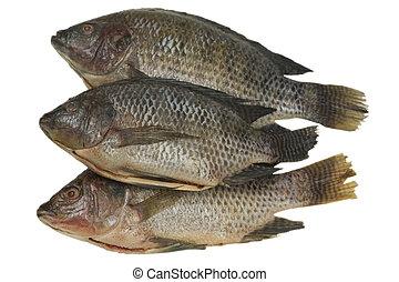 Whole Tilapia Fish