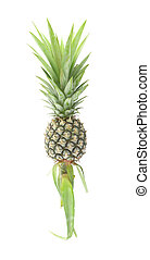 Whole vertical pineapple on white background.