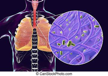 Whooping cough bacteria Bordetella pertussis in human...