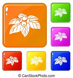 Whortleberries icons set color