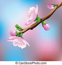 wiśnia, kwitnąc, drzewo
