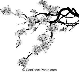 wiśniowe drzewo, gałąź