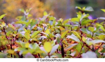 wiatr, leaves., closeup, liście, ognisko., barwny, ...