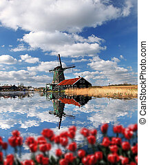wiatraki, holandia, tulipany, Amsterdam, Holenderski,...
