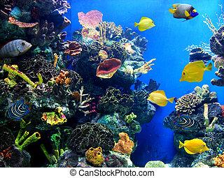 wibrujący, życie, akwarium, barwny