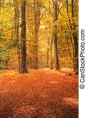 wibrujący, wizerunek, autumn las, upadek, krajobraz