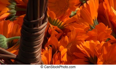 Wicker basket full of marigold - Wicker basket full of...