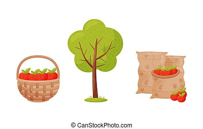 Wicker Basket with Apples and Tree as Seasonal Harvesting and Yield Vector Set