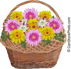 Wicker basket with chrysanthemum flowers, vector isolated illustration