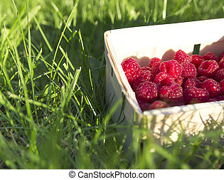 wicker basket with fresh raspberries stands on the green grass