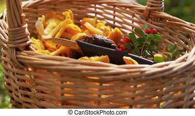 wicker basket with mushrooms and berries in forest - picking...