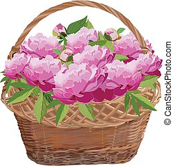 Wicker basket with peony flowers, vector isolated illustration