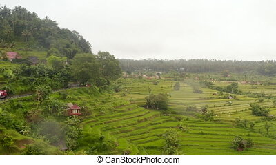 Wide aerial view of lush green farm rice plantations in Asia. Trucks driving on the hill road past tropical rural countryside in Bali