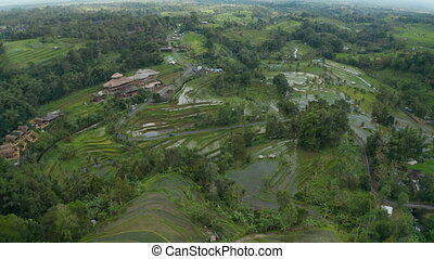 Wide aerial view of the water on a rice plantations in rural Bali countryside. Cars on a rural road through farm fields in Asia