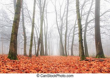 Wide autumn fog
