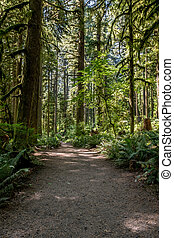 Wide Dirt Trail Through Mossy Forest