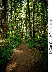 Wide Dirt Trail Through Pine Forest