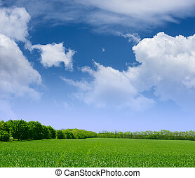 Wide Field of Green Grass, Forest and Blue Sky with Clouds