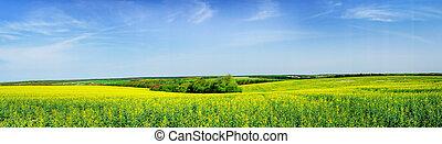Wonderful panorama of rapefield by springtime.