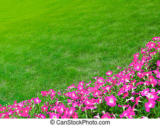 Wide Green Grass Meadow with Pink Flowers