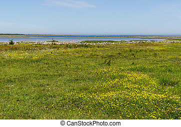 Wide open grassland with yellow flowers by the coast of the...