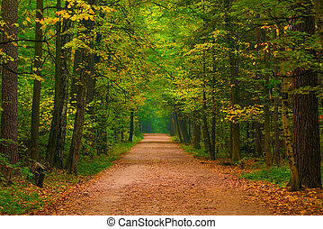 wide path in a beautiful autumn forest