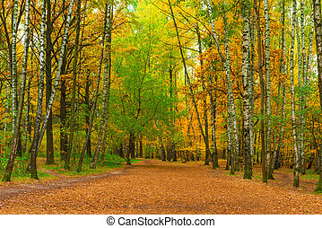 wide path in autumn park with birches