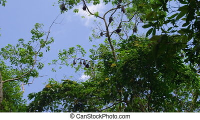Wide shot of bats on tree