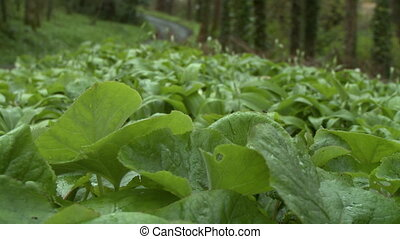 Low angle view of thick green undergrowth in the woods by a gravel road