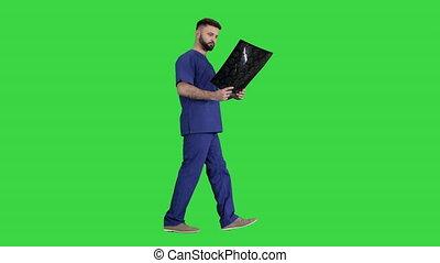 Surgeon studying mri brain scan while walking on a Green Screen, Chroma Key.