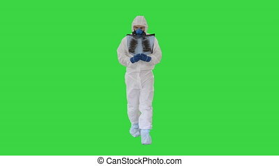 Walking scientist, Microbiologist or Doctor checking examining viral infection or pneumonia lesion on Chest X-ray film on a Green Screen, Chroma Key.