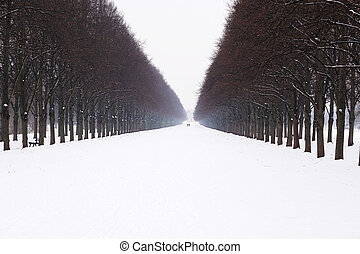 snow covered alley in winter