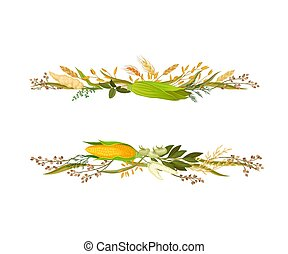 Wide strip between corn cobs and ears. Vector illustration.