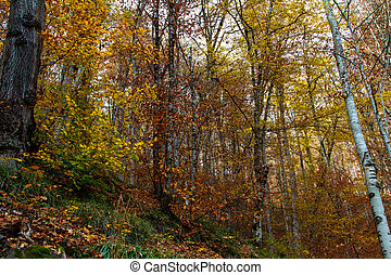 Wide View of Autumn Trees