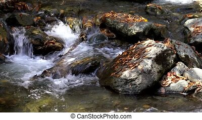 Wider Angle of Water Rushing Over Leaf Covered Rocks In Small Stream