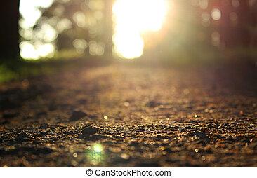 wieczorny, gatchina, park, jest, zaświecić, przez, przedimek określony przed rzeczownikami, lato, sun.the, ścieżka, z, żwir, w, przedimek określony przed rzeczownikami, gatchina, park, z, niejaki, nisko kątek, jest, oświetlany, przez, przedimek określony przed rzeczownikami, zmontowanie, sun.