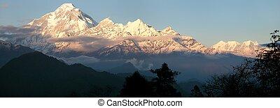 wieczorny, obsada, panoramiczny, -, prospekt, nepal, dhaulagiri