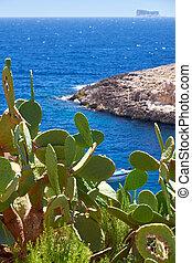 wied, einde, eiland, op, malta, water, zurrieq, fjord, cactus, zuiden