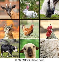 wielki, collage, zwierzęta, zagroda