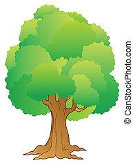 wielkie drzewo, z, zielony, treetop