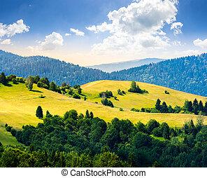 wiese, berge, hügel, sonnenaufgang, wald