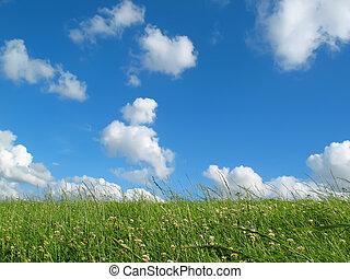 wiese, mit, blauer himmel