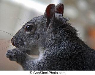 wiewiórka, do góry szczelnie