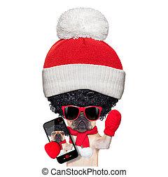 wig selfie dog - fawn french bulldog dog wearing winter...