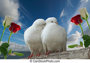 wihte doves in love - two love birds and roses against blue...