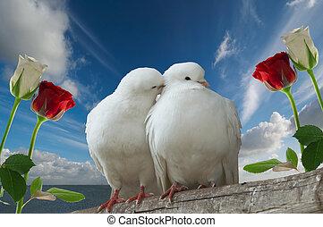 wihte, duiven, verliefd