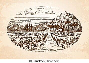 wijngaard, door, de, sea.