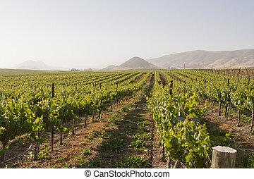 wijngaard, edna, vallei