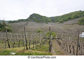 wijngaard, eifel, vulkan