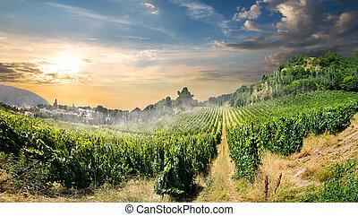 wijngaard, in, bergen
